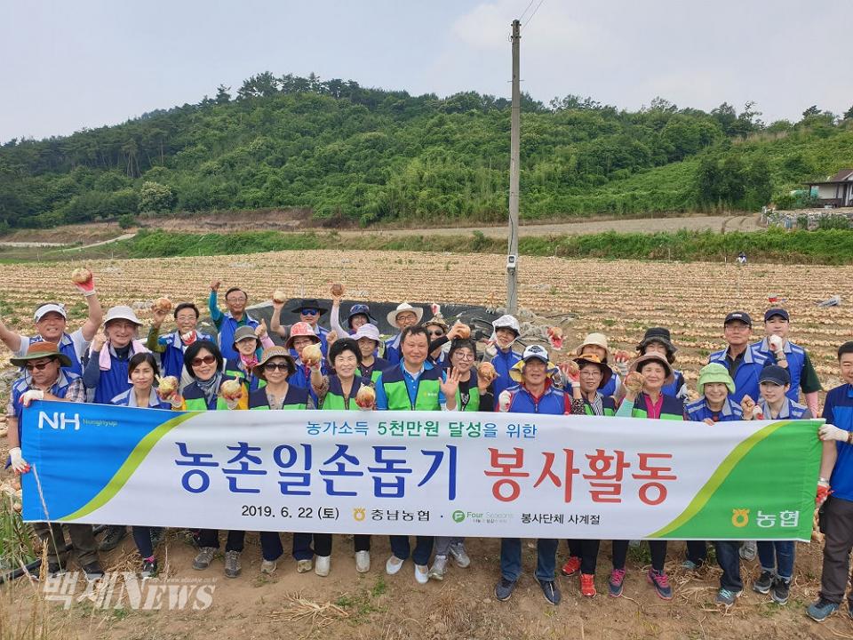 충남농협과 사계절봉사단 60여명이 양파농가에 대한 양파수확 일손돕기를 끝낸 뒤 함께 기념촬영을 하고 있다. ⓒ백제뉴스